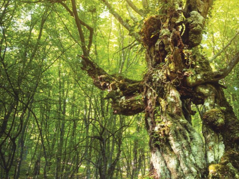 Drzewa i sens życia